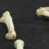 Un pied, un orteil opposable, une nouvelle espèce humaine ?