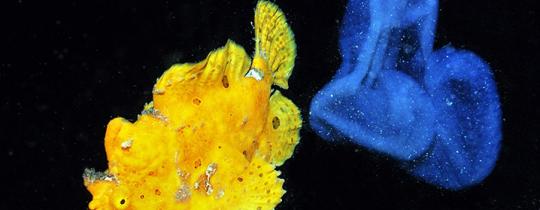 [Image] Magnifiques poissons des récifs coralliens