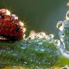 Coccinelle, bernard l'hermite et autre bêtes des mers : sélection d'images n°2