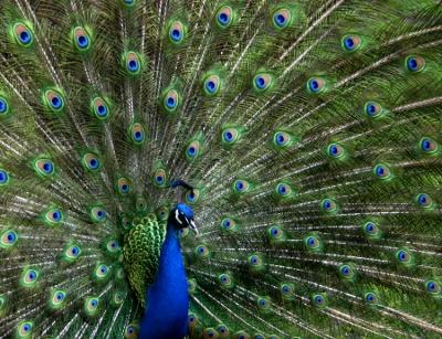 La d pression est elle vraiment une maladie for Maladie poules perte plumes