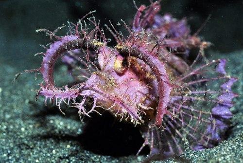 poisson-corail