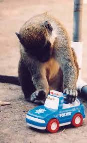 singe joue à la voiture
