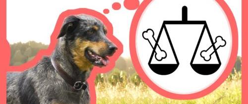 Votre chien est-il un animal moral ? – feat Noké & Cie