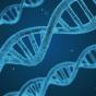 """Le """"gène gay"""" : génétique et homosexualité"""