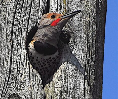 surveillance-nid-oiseaux