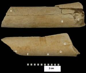 os-traces-coupures-paleontologie
